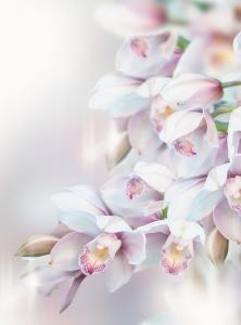 Фотообои/P коллекцияНежная орхидея 200х270