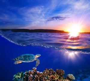 Фотообои/T коллекцияМорская черепаха 300х270