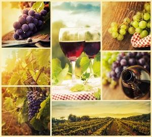 Виноградники микс 300х270 см