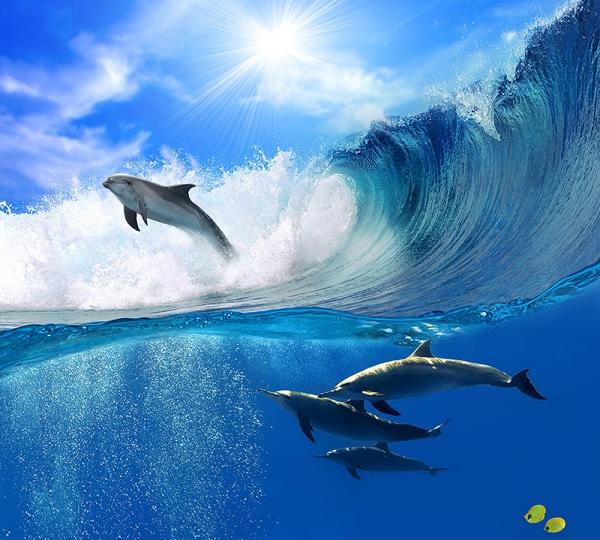 Фотообои/B коллекцияДельфины в волнах 300х270 см
