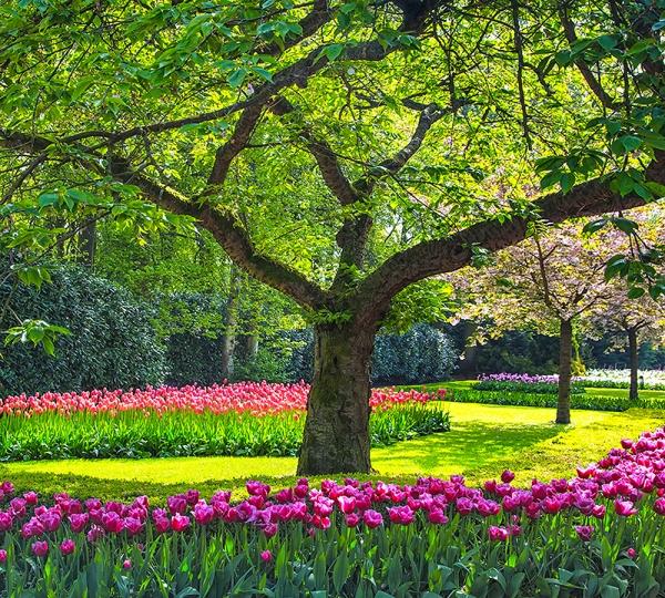 Фотообои/B коллекцияДерево в саду 300х270 см