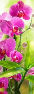 Сияющая орхидея 100х270 см