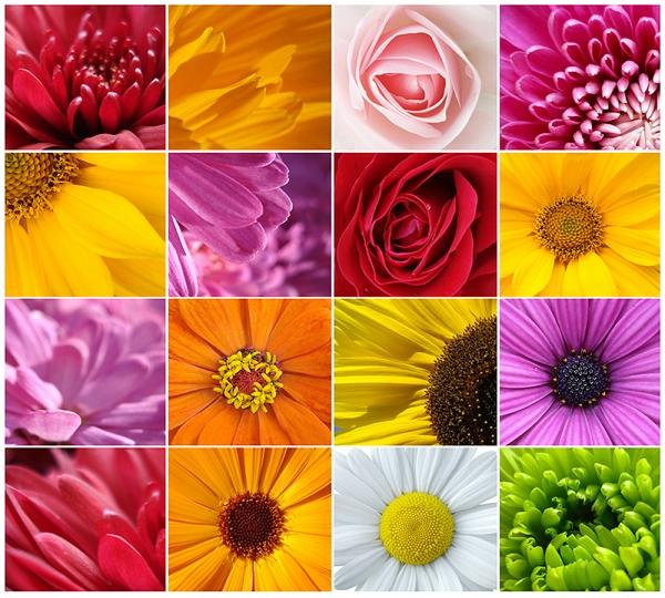 Фотообои/B коллекцияЦветы микс 300х270 см