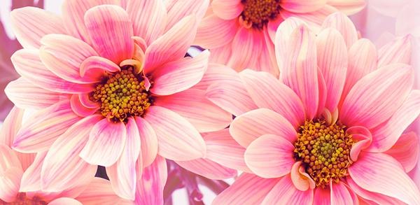 Фотообои/B коллекцияЦветы романтика 300х147 см