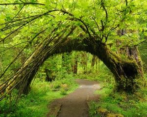 Живая арка 300х238 см