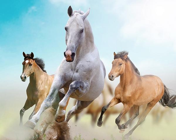 Лошади 300х238 см