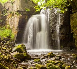 Фотообои/C коллекцияВодопад в реликтовом лесу 300х270 см