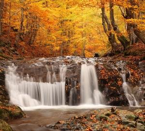 Осенний лес 300х270 см