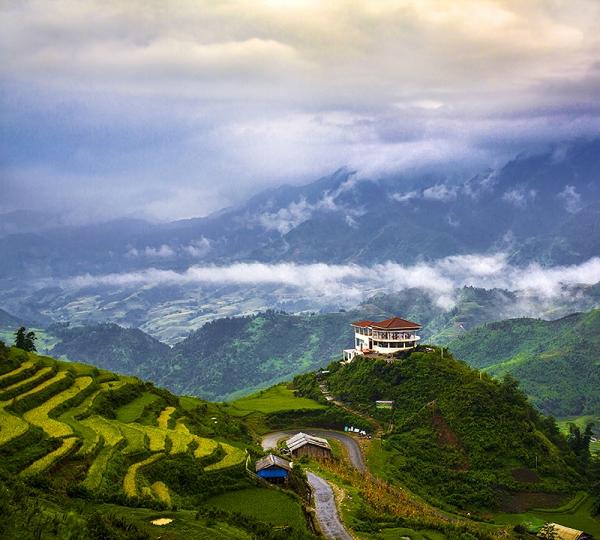 Чайные плантации 300х270 см