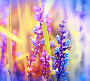 Радужные цветы 300х270 см