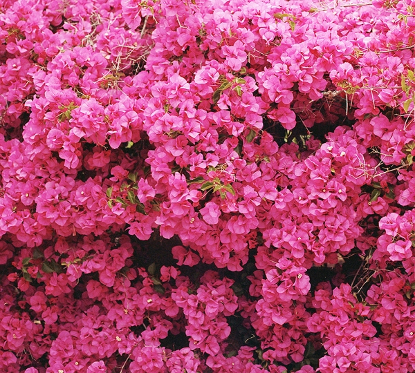 Фотообои/C коллекцияСтена цветов 300х270 см