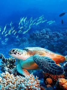 Морская черепаха 200х270 см