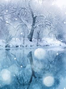 Зимний лес 200х270 см