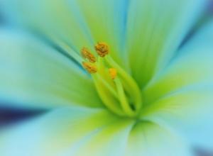 Фотообои/C коллекцияВолшебный цветок 200х147 см