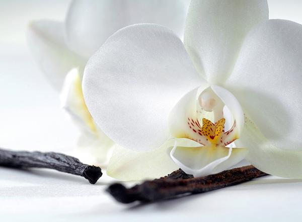 Фотообои/C коллекцияОрхидея и ваниль 200х147 см