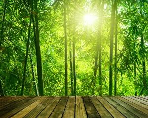 Фотообои/C коллекцияВыход в бамбуковую рощу 300х238 см