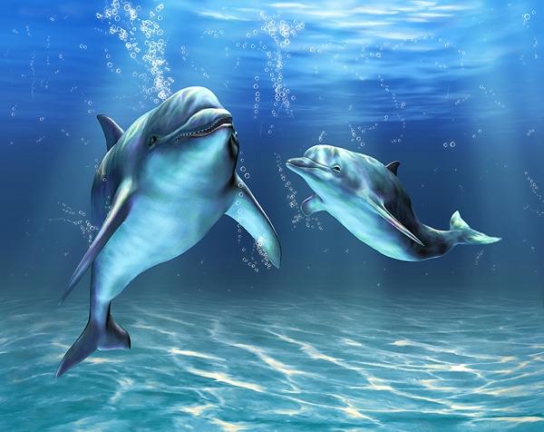 Два дельфина 300х238 см