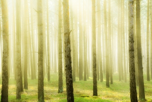 Весеннее утро в лесу 400х270 см