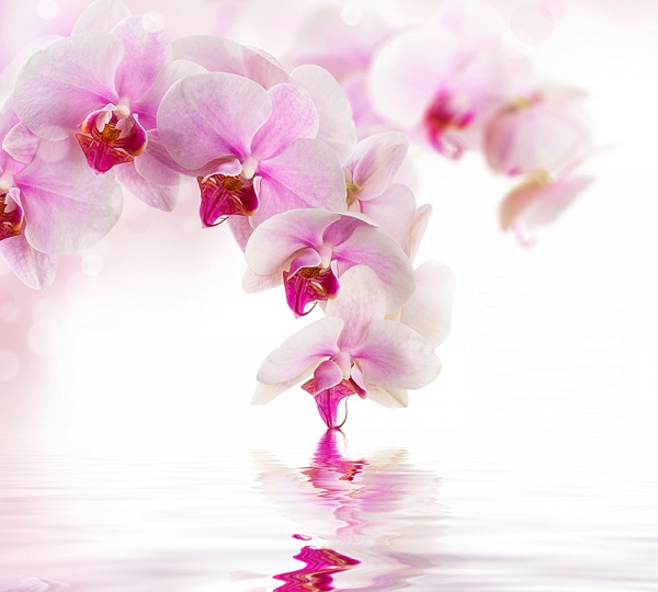 Фотообои/D коллекцияРозовая орхидея 300х270 см