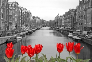Красные тюльпаны 400х270 см