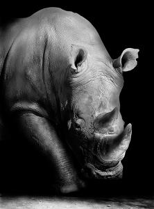 Носорог 200х270 см