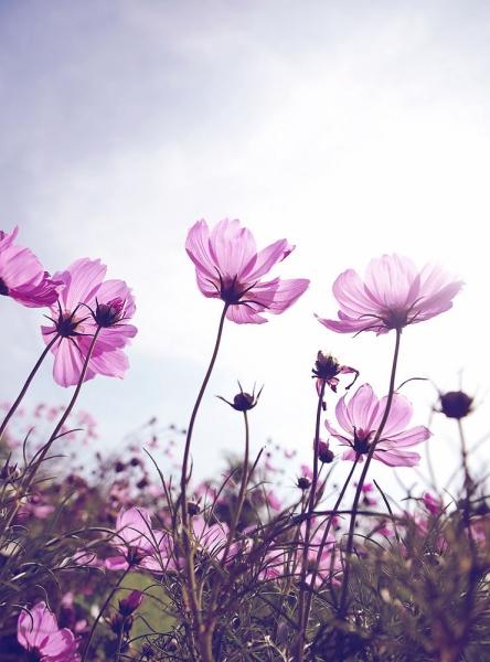 Полевые цветы 200х270 см