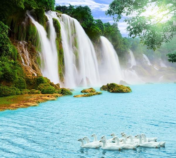 Фотообои/E коллекцияГуси у водопада 300х270 см
