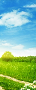 Рулонные шторы DIVINO DelDecor/Мини шторыMRB-0239 (02 Термо-Блэкаут, 72(68)x170 см)