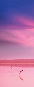 Рулонные шторы DIVINO DelDecor/Мини шторыMRB-0287 (02 Термо-Блэкаут, 72(68)x170 см)